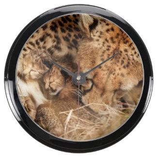 Cheetah (Acinonyx Jubatus) Grooming One-Day Old Aquarium Clocks