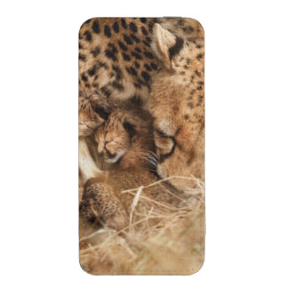 Cheetah (Acinonyx Jubatus) Grooming One-Day Old iPhone 5 Pouch