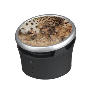Cheetah (Acinonyx Jubatus) Grooming One-Day Old Speaker