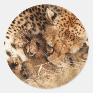 Cheetah (Acinonyx Jubatus) Grooming One-Day Old Round Sticker