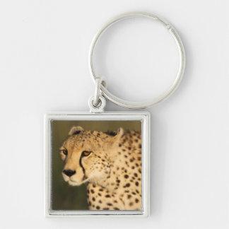 Cheetah, Acinonyx jubatus, in the Masai Mara 2 Key Chain