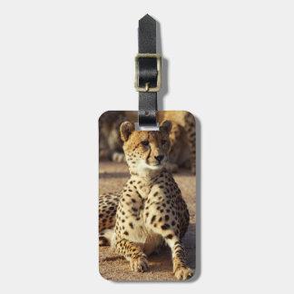 Cheetah (Acinonyx Jubatus), Kruger Natl. Park Luggage Tag