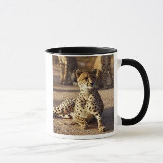 Cheetah (Acinonyx Jubatus), Kruger Natl. Park Mug