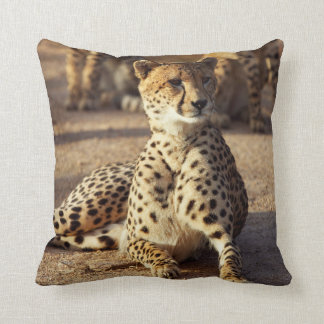 Cheetah (Acinonyx Jubatus), Kruger Natl. Park Throw Pillow