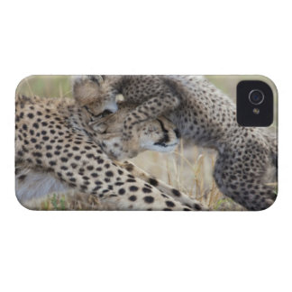 Cheetah (Acinonyx jubatus) mother playing with iPhone 4 Case-Mate Case