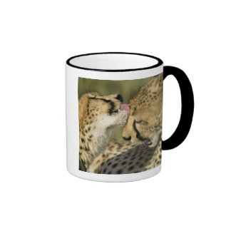 Cheetah, Acinonyx jubatus, mutual grooming in Ringer Coffee Mug