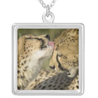 Cheetah, Acinonyx jubatus, mutual grooming in Silver Plated Necklace