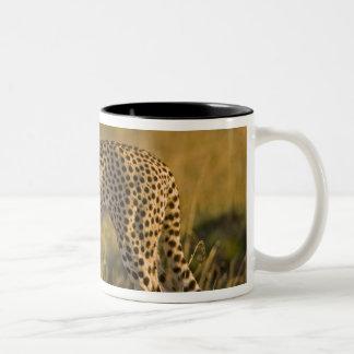 Cheetah Acinonyx jubatus) on plain, Masai Two-Tone Coffee Mug