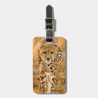 Cheetah (Acinonyx Jubatus) Portrait, Maasai Bag Tag