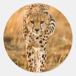Cheetah (Acinonyx Jubatus) Portrait, Maasai Classic Round Sticker