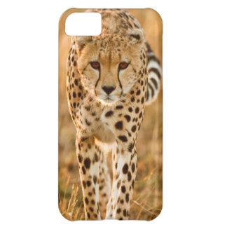 Cheetah (Acinonyx Jubatus) Portrait, Maasai iPhone 5C Cover
