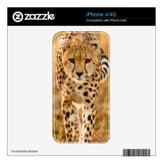 Cheetah (Acinonyx Jubatus) Portrait, Maasai Skin For The iPhone 4S