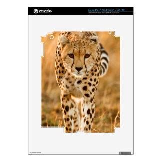 Cheetah (Acinonyx Jubatus) Portrait, Maasai Decals For iPad 3