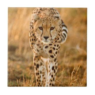 Cheetah (Acinonyx Jubatus) Portrait, Maasai Small Square Tile