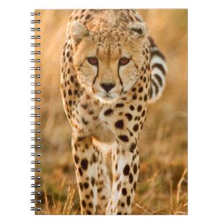 Cheetah (Acinonyx Jubatus) Portrait, Maasai Spiral Notebook
