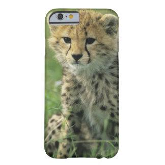 Cheetah, (Acinonyx jubatus), Tanzania, Serengeti Barely There iPhone 6 Case
