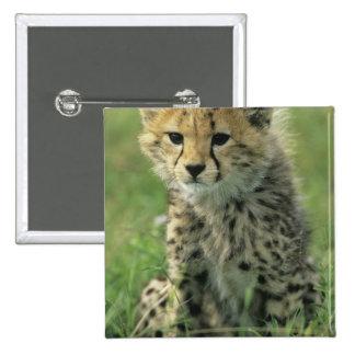 Cheetah, (Acinonyx jubatus), Tanzania, Serengeti Pinback Buttons