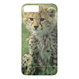 Cheetah, (Acinonyx jubatus), Tanzania, Serengeti iPhone 8 Plus/7 Plus Case