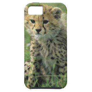 Cheetah, (Acinonyx jubatus), Tanzania, Serengeti iPhone SE/5/5s Case