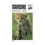 Cheetah, (Acinonyx jubatus), Tanzania, Serengeti Postage Stamp