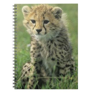 Cheetah, (Acinonyx jubatus), Tanzania, Serengeti Spiral Notebook