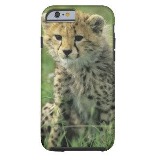 Cheetah, (Acinonyx jubatus), Tanzania, Serengeti Tough iPhone 6 Case