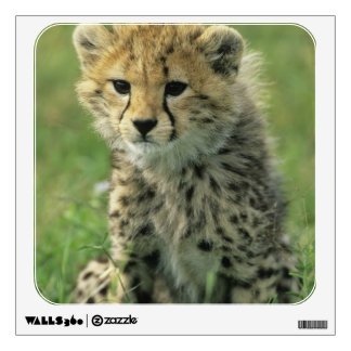 Cheetah, (Acinonyx jubatus), Tanzania, Serengeti Wall Sticker