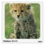 Cheetah, (Acinonyx jubatus), Tanzania, Serengeti Room Decals