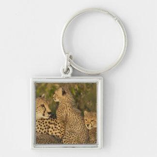 Cheetah, Acinonyx jubatus, Upper Mara, Masai Keychain
