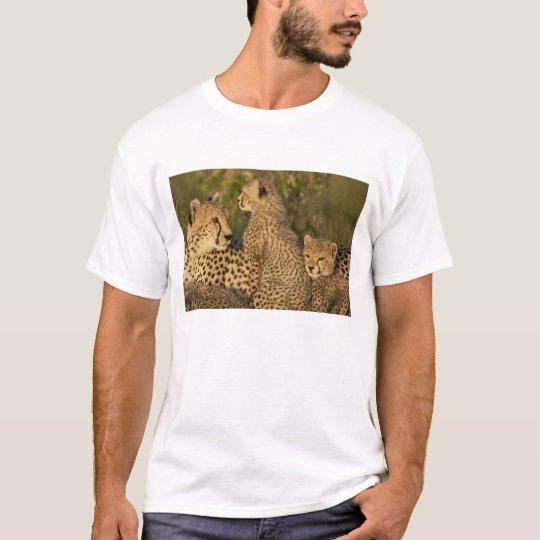 Cheetah, Acinonyx jubatus, Upper Mara, Masai T-Shirt