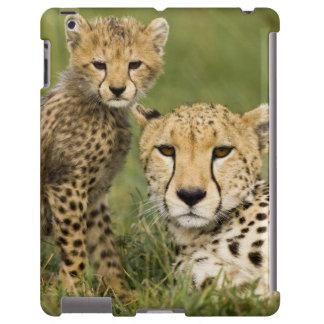 Cheetah, Acinonyx jubatus, with cub in the