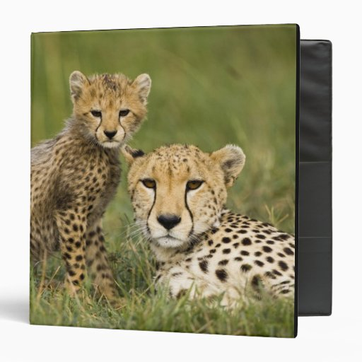 Cheetah, Acinonyx jubatus, with cub in the Binder