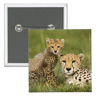Cheetah, Acinonyx jubatus, with cub in the 2 Inch Square Button