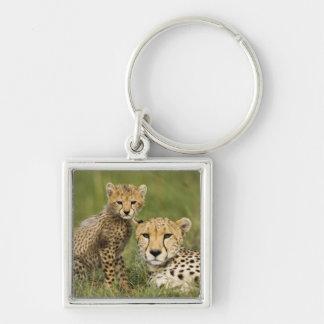 Cheetah, Acinonyx jubatus, with cub in the Key Chain