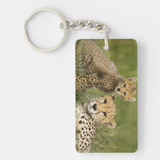 Cheetah, Acinonyx jubatus, with cub in the Rectangular Acrylic Keychains