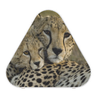 Cheetah, Acinonyx jubatus, with cub in the Masai 2 Bluetooth Speaker