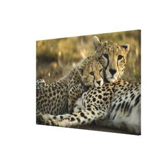 Cheetah, Acinonyx jubatus, with cub in the Masai 2 Canvas Prints