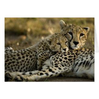 Cheetah, Acinonyx jubatus, with cub in the Masai 2 Greeting Card