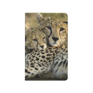 Cheetah, Acinonyx jubatus, with cub in the Masai 2 Journal