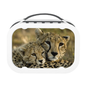 Cheetah, Acinonyx jubatus, with cub in the Masai 2 Yubo Lunch Box