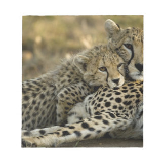 Cheetah, Acinonyx jubatus, with cub in the Masai 2 Notepad