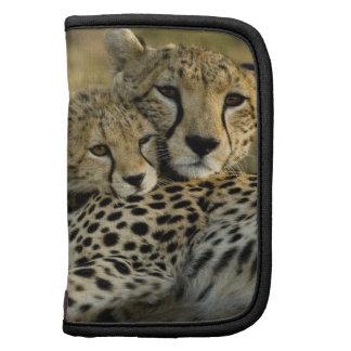 Cheetah, Acinonyx jubatus, with cub in the Masai 2 Organizer