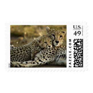 Cheetah, Acinonyx jubatus, with cub in the Masai 2 Postage