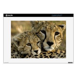 Cheetah, Acinonyx jubatus, with cub in the Masai 2 Skin For Laptop