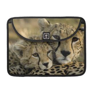 Cheetah, Acinonyx jubatus, with cub in the Masai 2 Sleeve For MacBook Pro