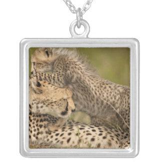 Cheetah, Acinonyx jubatus, with cub in the Masai 3 Jewelry