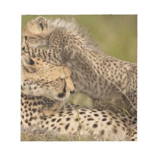 Cheetah, Acinonyx jubatus, with cub in the Masai 3 Notepad