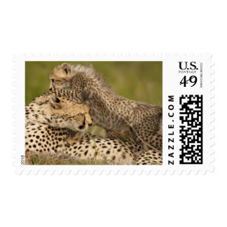 Cheetah, Acinonyx jubatus, with cub in the Masai 3 Postage Stamps