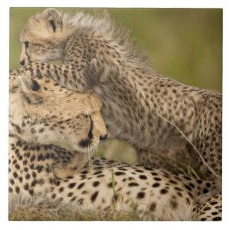 Cheetah, Acinonyx jubatus, with cub in the Masai 3 Tile