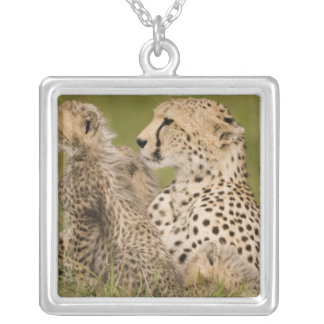 Cheetah, Acinonyx jubatus, with cub in the Masai Pendants